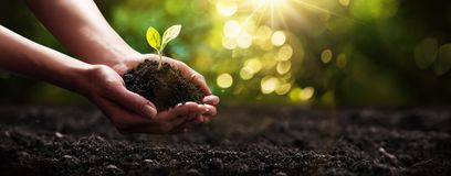 stock image of  plant in hands. ecology concept. nature background