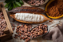 stock image of  cocoa beans and pod