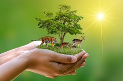 stock image of  concept nature reserve conserve wildlife reserve tiger deer global warming food loaf ecology human hands protecting the wild and w