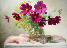 stock image of  cosmos flowers