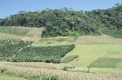 stock image of  cultivated fields and deforestation in southern brazil.
