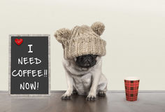 stock image of  cute little pug puppy dog with bad morning mood, sitting next to blackboard sign with text i need coffee now, copy space