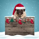stock image of  cute pug puppy dog wearing santa hat hanging with paws on weathered wooden sign with christmas decoration
