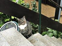 stock image of  a cute tabby cat.
