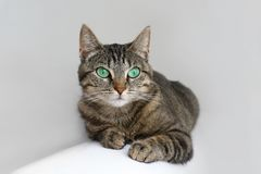 stock image of  cute tabby cat with green eyes lies on white couch.