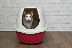 stock image of  cute tabby cat sitting in a red litter box and looking to the camera.