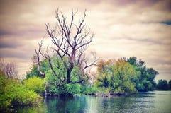 stock image of  danube river. superb dramatic landscape in natural reserve of the danube delta - landmark attraction in romania