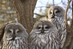 stock image of  detail of owls