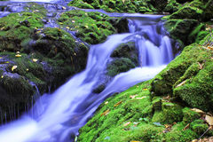stock image of  dickson brook at fundy