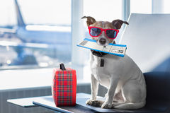 stock image of  dog in airport terminal on vacation