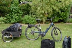 stock image of  dog bike trailer