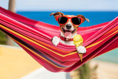stock image of  dog on hammock in summer with ice cream