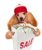 stock image of  dog. shopper. sales.