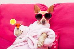 stock image of  dog spa wellness