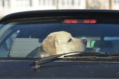 stock image of  dog traveling by car