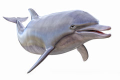 stock image of  dolphin isolated