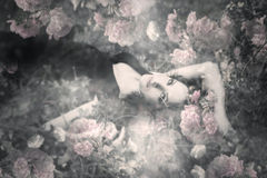 stock image of  dream of roses