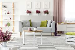 stock image of  elegant living room with white furniture, stylish wooden coffee table, patterned rug, grey couch with pillows and heather