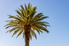 stock image of  exotic palm tree against blue sky in greece