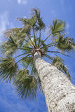 stock image of  exotic tropical palm tree on cloudy blue sky background