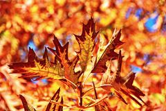 stock image of  fall leaves