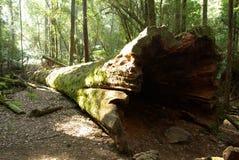 stock image of  fallen tree trunk