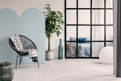 stock image of  fashionable living room interior with white and blue wall,green plant in pot and trendy chair