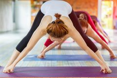 stock image of  fitness asian female group doing warm up yoga pose in row at the yoga class