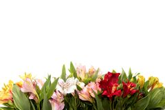 stock image of  flower composition on white background with copyspace