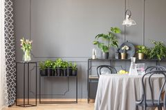stock image of  flowers on black table next to plants in grey dining room interior with chairs and lamp. real photo