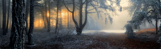 stock image of  fog in the forest