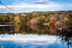 stock image of  foliage in new jersey