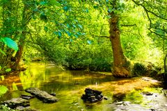 stock image of  forest with brook