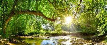 stock image of  forest with brook and bright sun