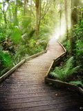 stock image of  forest path