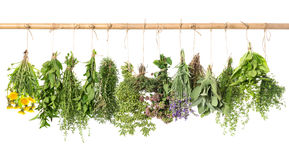 stock image of  fresh herbs hanging isolated on white background. basil, rosemary