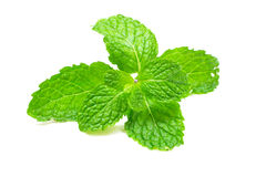 stock image of  fresh mint