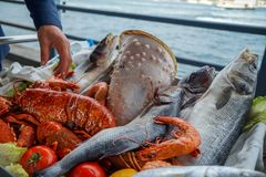 stock image of  fresh raw seafood presentation on cart at seaside restaurant with a man hand including fishes, prawn, shell, etc. on blurred ocean