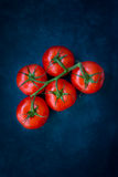 stock image of  fresh ripe organic tomatoes on a vine on dark blue background, styled food photography, copyspace, top view