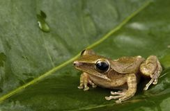 stock image of  frog on green leaf.