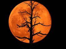 stock image of  full moon with dead plant