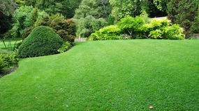 stock image of  garden lawn