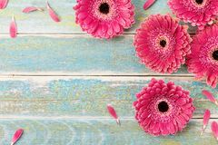 stock image of  gerbera daisy flower greeting card background for mother or womans day. vintage style. top view.