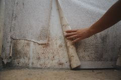 stock image of  black mold damage to home