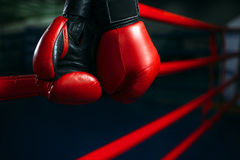 stock image of  gloves on the ring ropes, boxing concept, nobody