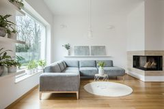 stock image of  grey corner lounge standing in white living room interior with two modern art paintings on the shelf, fireplace and tulips on smal