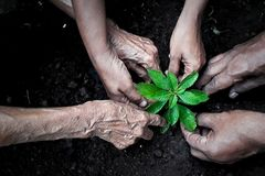 stock image of  group of people planting