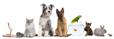 stock image of  group of pets