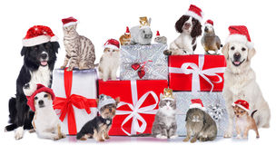 stock image of  group of pets in a row with santa hats