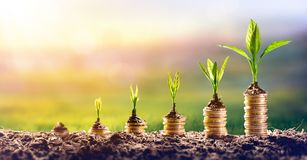 stock image of  growing money - plant on coins